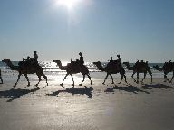 broome_cable_beach_camels.jpg